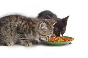 Maistas gyvūnams