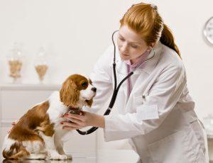 Veterinarijos paslaugos
